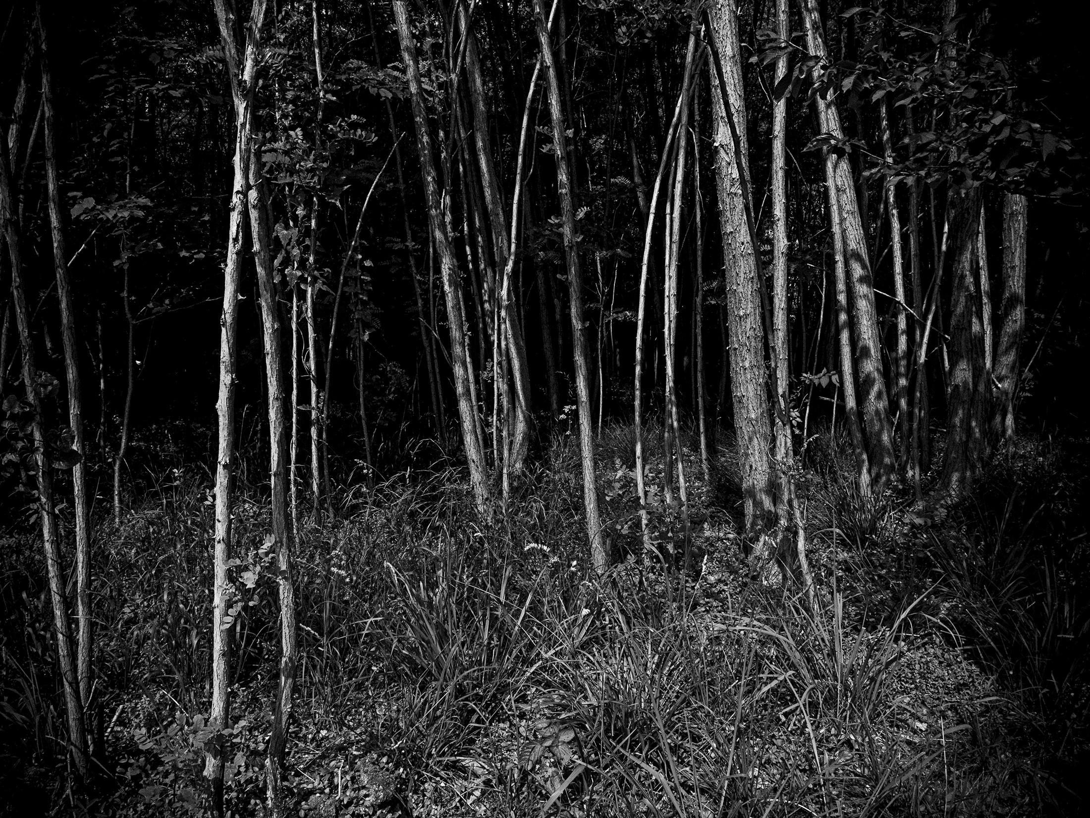 Jarred Elrod, Photography, Amanda